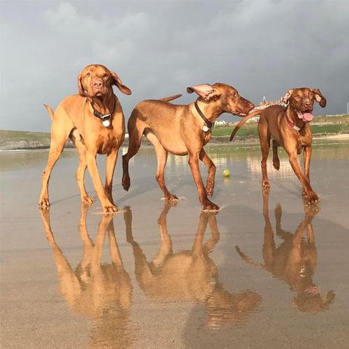 BorrowMyDoggy dog at the beach