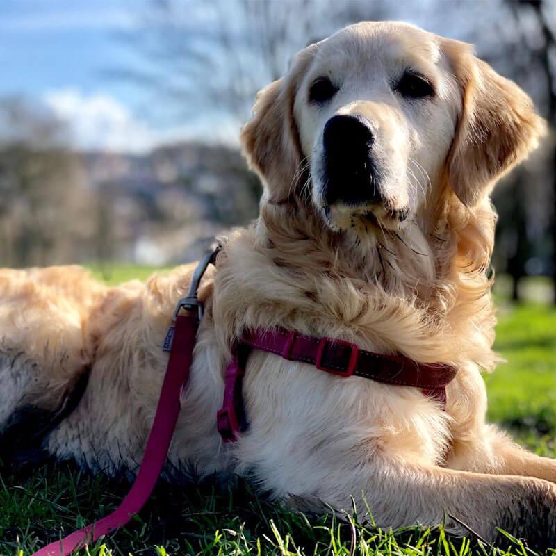 BorrowMyDoggy dog in park