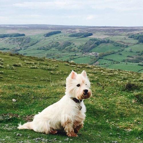 BorrowMyDoggy dog at the highlands