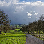 """Dog Walks in Ashton Court Estate by Michiel Jelijs licensed under CC BY 2.0"""