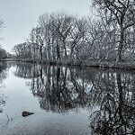Bushy Park, a great place to walk your dog