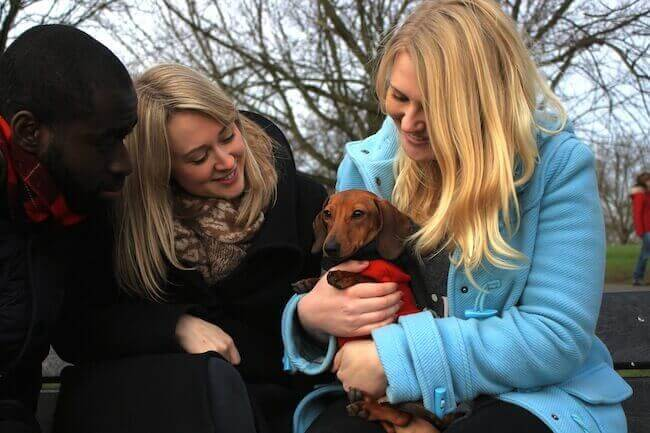 adorable dachshund with his owners and borrower, members of borrowmydoggy, a great alternative to doggy daycare