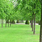 """Dog Walking in Glasgow Green by Glasgow Green_0857 licensed under CC BY-SA 2.0"""
