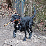"""""""Dog Walks in Heaton Park by Phil Long licensed under CC BY 2.0"""""""