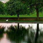 """Dog Walks in Inverleith Park by Jenni Douglas licensed under CC BY 2.0"""