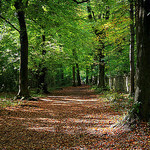 """Dog walks in Leigh Woods by Adrian Scottow licensed under CC BY-SA 2.0"""