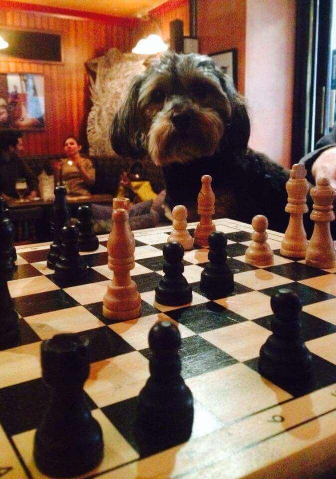 a dog in mvp, a dog friendly pub in dublin