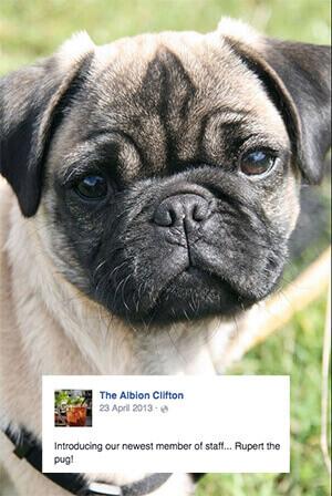 the albion, a dog friendly pub in bristol