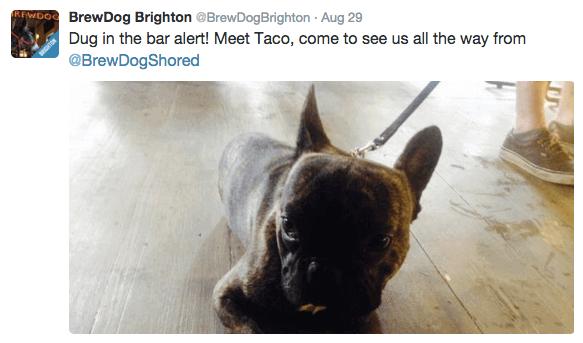 brewdog, a dog friendly pub in brighton