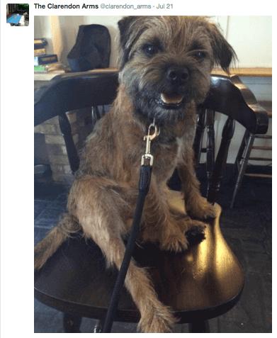 the clarendon arms, a dog friendly pub in cambridge