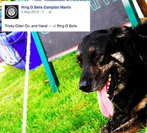ring o'bells, a dog friendly pub in bristol