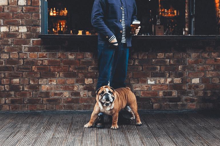 Dog Friendly Newcastle | BorrowMyDoggy - Leaving Pawprints