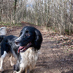 """Dog Walking in Stanmer Park by Miles Sabin licensed under CC BY-SA 2.0"""