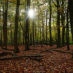 """Dog Walks in Sutton Park by Andrew Callow licensed under CC BY 2.0"""