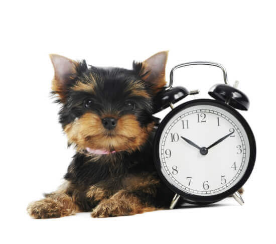 cute dog sitting with a clock
