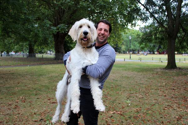 BorrowMyDoggy dog and house sitters