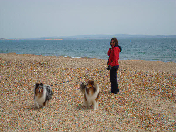 Collies at Highcliffe Castle Beach, a dog friendly beach in Dorset