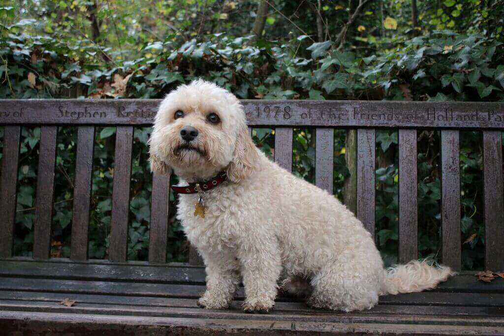photo of a cute dog on a park bench