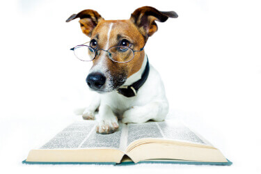 Dog reading book. Dog wearing glasses. Cute Jack Russell.