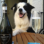 dog with prosecco