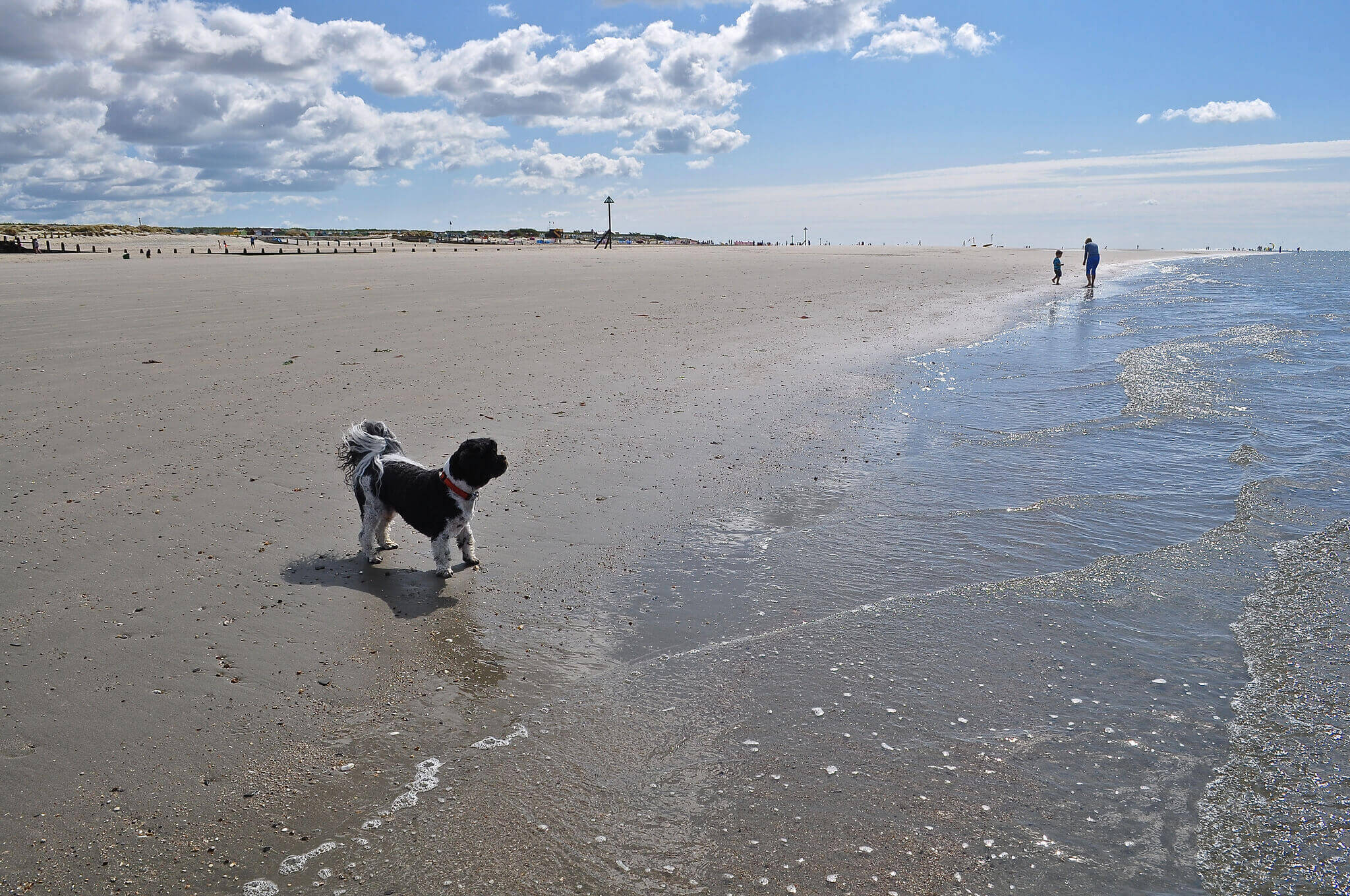 West Wittering Beach, a dog friendly beach in Sussex